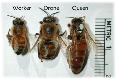 What Do Bees Like To Eat And Drink